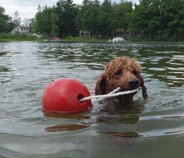 Reba loves to swim